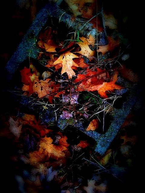 Autumn Remnants